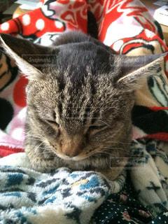 猫,ねこ,布団,お昼寝,ネコ,ぬくぬく