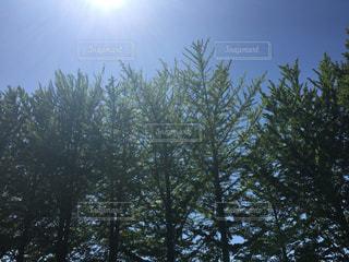 フォレスト内のツリー - No.768593