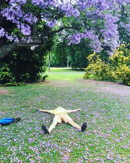 紫のお花の木の下で - No.780622