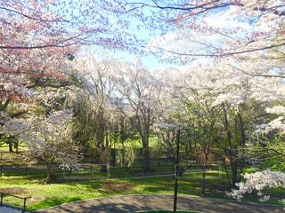 春の天神山緑地の写真・画像素材[1177147]