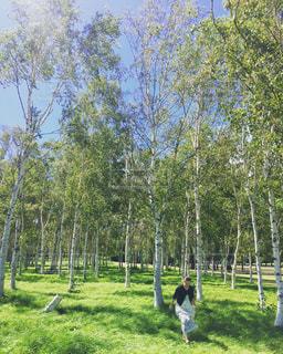 森の写真・画像素材[686645]