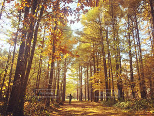 森の中の木の写真・画像素材[872600]