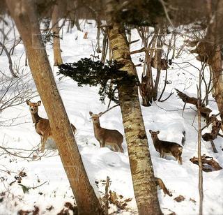 鹿の親子^ ^の写真・画像素材[880315]