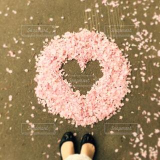 桜の写真・画像素材[1443330]