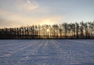 自然,冬,雪,白,北海道,朝焼け
