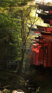大きな木の写真・画像素材[1052528]