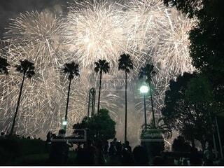 空の花火の群の写真・画像素材[3668041]