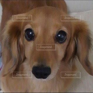 犬の写真・画像素材[19339]