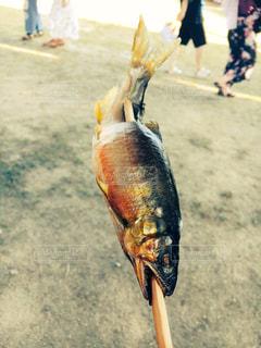 ランチ,鮎の塩焼き,鳥取