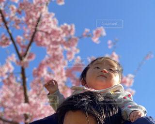 満開の桜の下で肩車の写真・画像素材[3262929]
