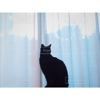 窓の隣に座っている猫の写真・画像素材[3340493]