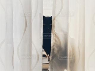 カーテンの隙間から覗く黒猫の写真・画像素材[3340501]