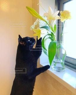 花が気になる猫の写真・画像素材[3366634]