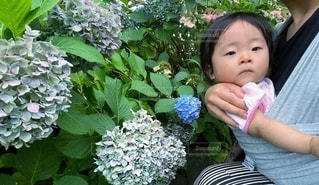 赤ちゃんと紫陽花の写真・画像素材[3400966]