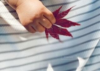 紅葉を持つ赤ちゃんの手の写真・画像素材[3813778]