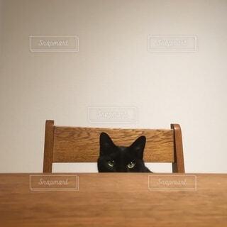 椅子に座る黒猫の写真・画像素材[3900559]