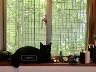 窓辺の雑貨と黒猫の写真・画像素材[3900556]