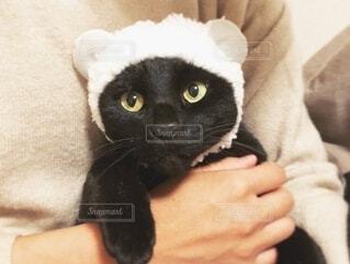 羊の帽子を被った黒猫の写真・画像素材[3958841]