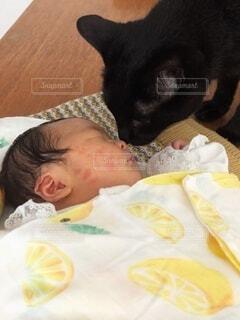 赤ちゃんと猫の初対面の写真・画像素材[4164502]