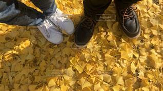 銀杏の絨毯と足元の写真・画像素材[4196603]