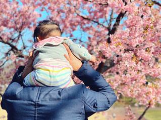 満開の桜の下で肩車をする親子の写真・画像素材[4273646]