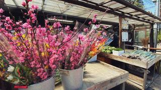 直売所で売られる桜の写真・画像素材[4303397]