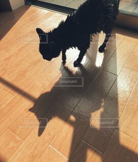 体を洗われた後の黒猫の写真・画像素材[4424367]