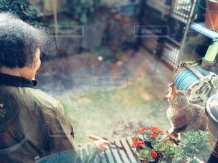 縁側に座るおばあちゃんと猫の後ろ姿の写真・画像素材[4551663]