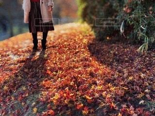 落ち葉の絨毯と女性の足元の写真・画像素材[4815591]