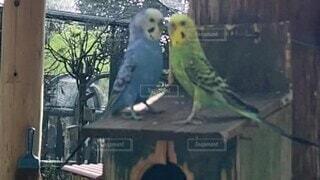 動物,鳥,屋外,2匹,仲良し,羽,インコ,動物園,飛び立つ,鳥小屋,スローモーション