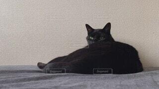 家族,猫,動物,ペット,リラックス,あくび,黒猫,眠い,ベッド
