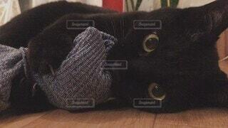 猫,動物,屋内,かわいい,黒,景色,ねこ,ペット,子猫,オシャレ,可愛い,黒猫,お洒落,靴下,ネコ科,いたずら,おしゃれ,お目々,習性,噛み付く,げしげし