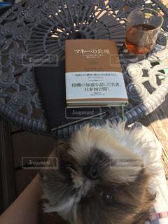 犬,本,読書,dog&book