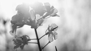 近くの花のアップの写真・画像素材[813616]