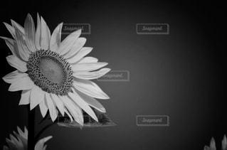 近くの花のアップの写真・画像素材[813630]