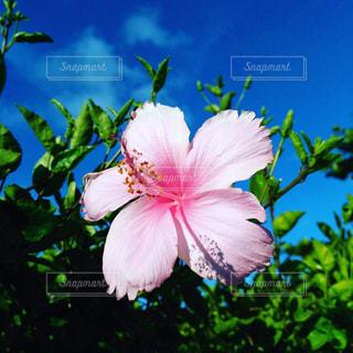 植物にピンクの花 - No.896657