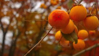 秋,フルーツ,柿