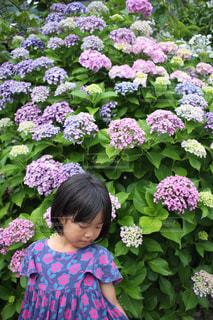 紫陽花と女の子。梅雨の季節も吹き飛ばせ。の写真・画像素材[1230911]