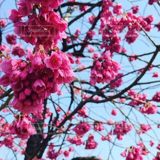 春の写真・画像素材[846413]