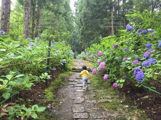 子ども,花,紫陽花,雨上がり,梅雨