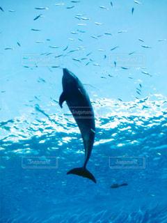 dolphin - No.691904