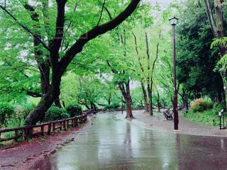 雨上がりの公園 - No.772479