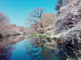 美しい春 - No.772618