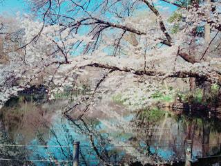 桜 - No.772623