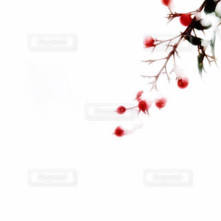 空気を通って飛んで人の写真・画像素材[922613]