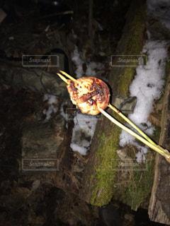 枝の上に座って鳥の写真・画像素材[771461]