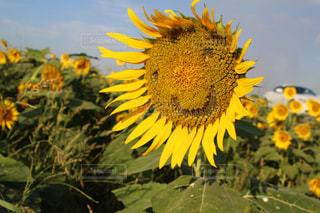 夏の写真・画像素材[700181]