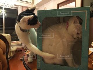 椅子に座って猫の写真・画像素材[706519]