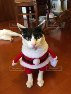 赤白と青の靴を履いて猫の写真・画像素材[875327]