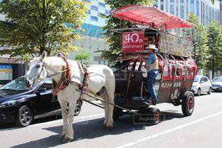 街で馬車馬に乗る男の写真・画像素材[885567]